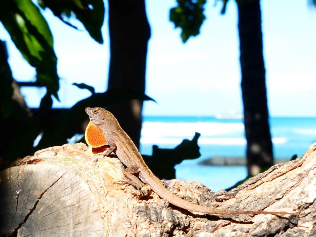 Hawaii Tiere