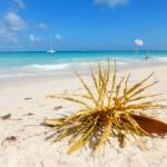 Playa Bavaro Dominikanische Republik