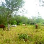 Pferde Reiten Punta Cana Dominikanische Republik