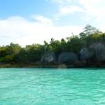 Mangroven Dominikanische Republik