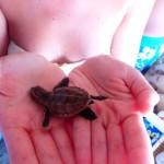 Schildkröten Saona Dominikanische Republik