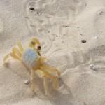 Krebse Punta Cana Dominikanische Republik
