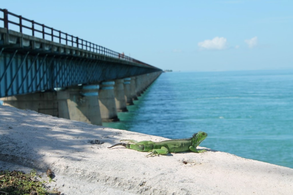 Florida Keys Highlights Seven Mile Bridge