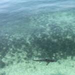 Florida Keys Highlights Haie