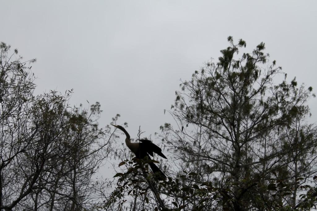 Tiere in den Everglades Vögel