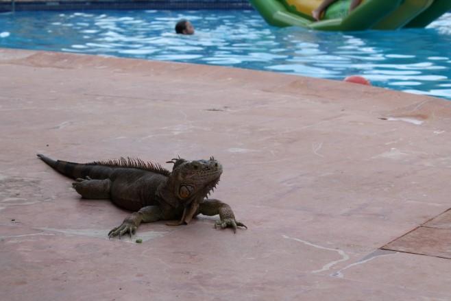 Melia Cozumel Mexiko Reiseblog