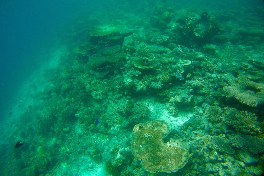 Schnorcheln im Lhaviyani Atoll auf den Malediven - Reiseblog ferntastisch