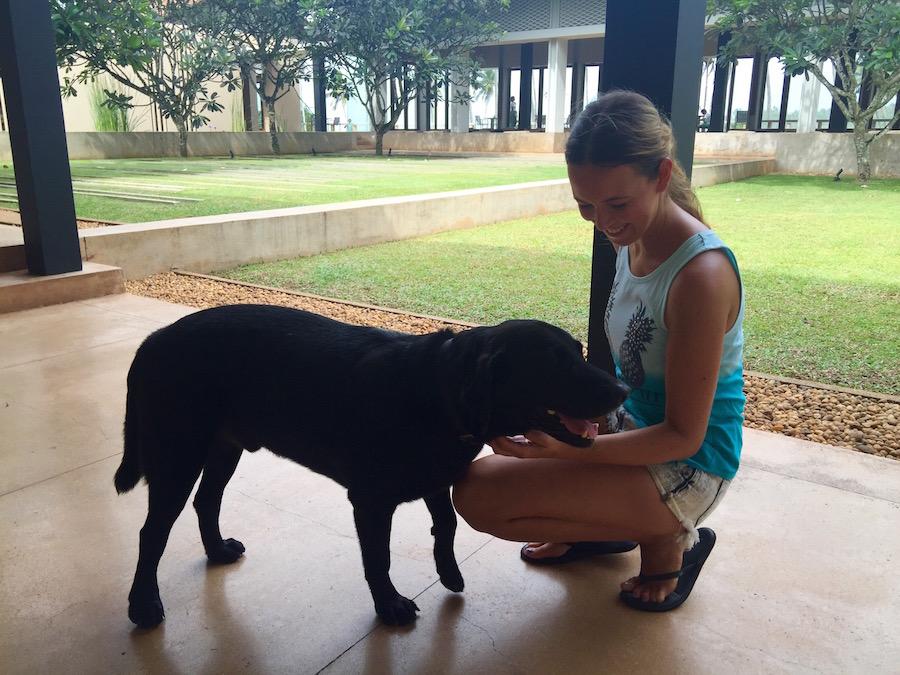 Hund Nero Amanwella Sri Lanka - Reiseblog ferntastisch
