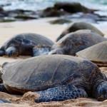 Endlich wieder auf Hawaii: Aloha von Maui