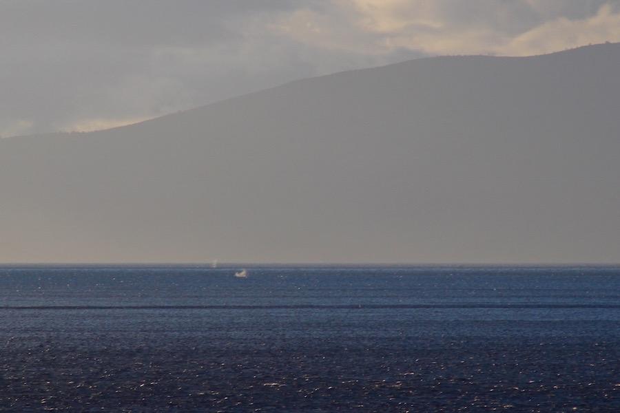 Tiere auf Maui Hawaii - Reiseblog ferntastisch