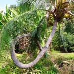 Kuriose Fakten über Hawaii